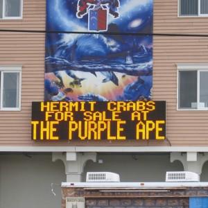 17mm-purpleape